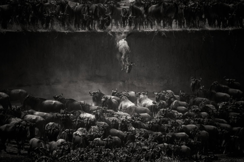 The great migration by Nicole Cambré