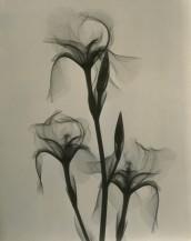 """Dr. Dain L. Tasker, """"Fleur-de-lis"""" (1936)"""