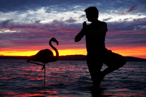 3_the_flamingo_0-728x484